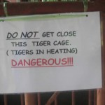 Thailand Tigers In Heating