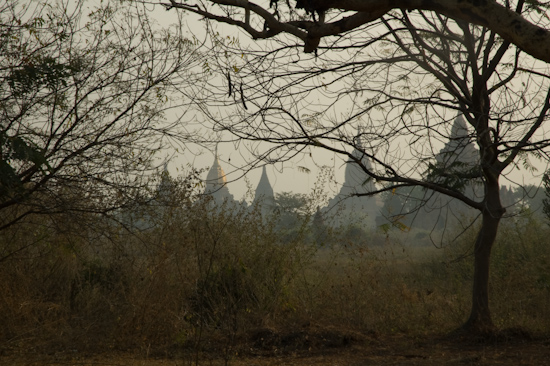 Temples Through The Trees, Bagan, Burma
