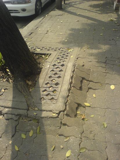The Ankle Breaking Tree Sidewalk