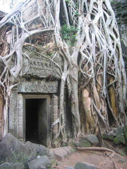 Strangler Vines at Ta Phrom Temple, Angkor, Cambodia